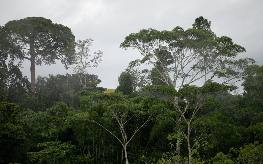 The Last Flying River: Ecological and Cultural Conservation in the Amazon
