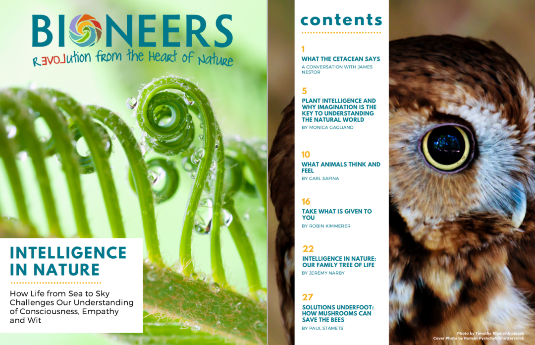 Bioneers Reader: Intelligence in Nature