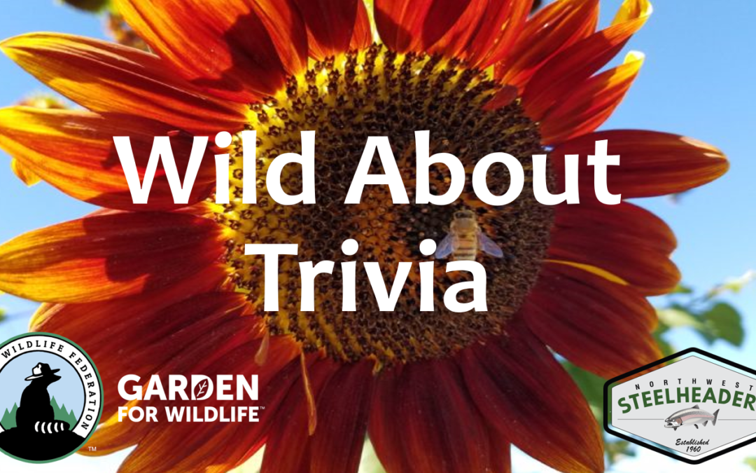 Wild About Trivia