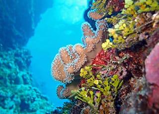 Corals Week 2020